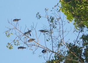 Kerala Kumarakom Bird Sanctuary