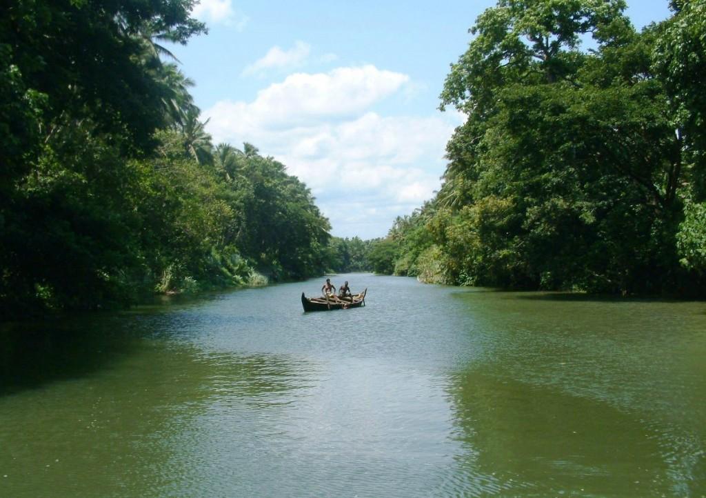 Flora and Fauna of Kerala Backwaters