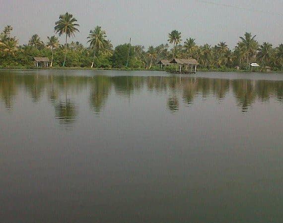 Fishing…For Fun at Njarakkal Aqua Fish Farm