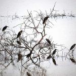 Birds In Kerala