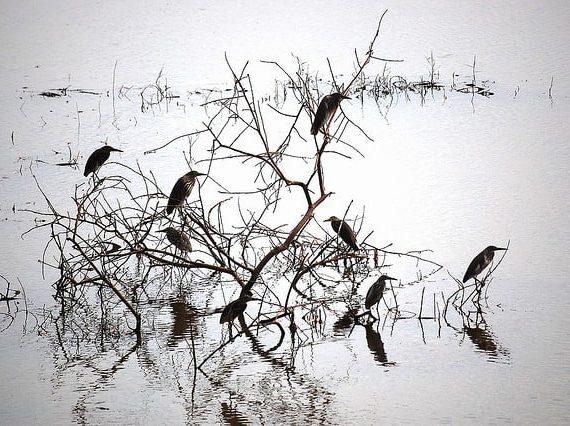 Bird Sanctuaries of Kerala