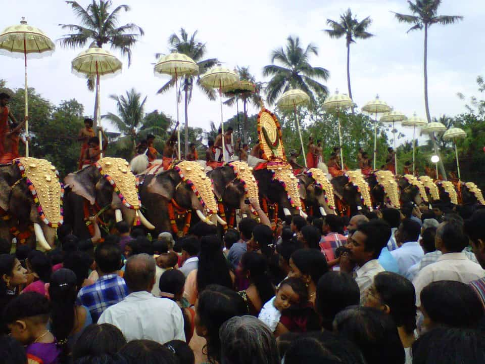 Elephants lined up for Trichur Pooram