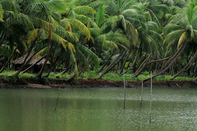 Valiyaparamba-Backwaters-kasargod