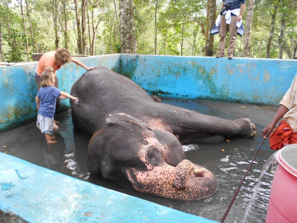 Give Elephant Bath