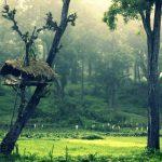 Stunning Kerala Images