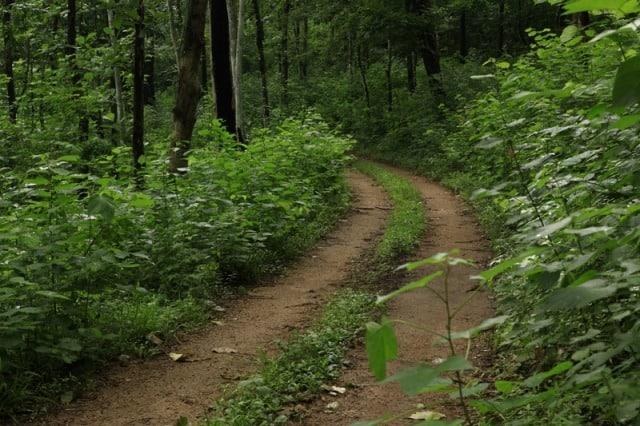 Konni Forest