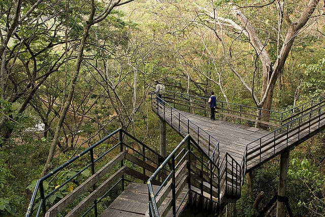 Thenmala Ecotourism Bridge