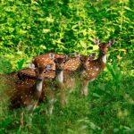 25 Incredible Images: Kerala's Flora and Fauna