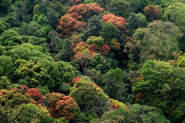 Nelliyampathy Forest Range