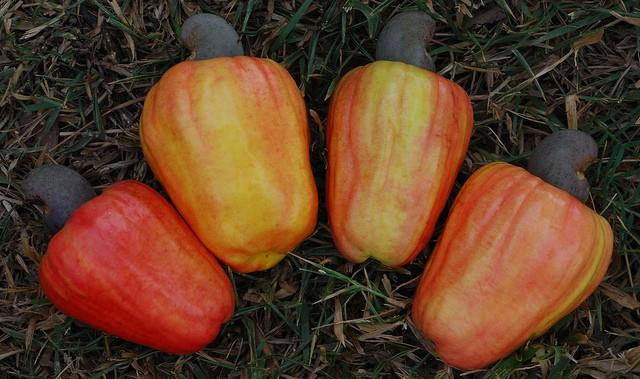 cashew-apple