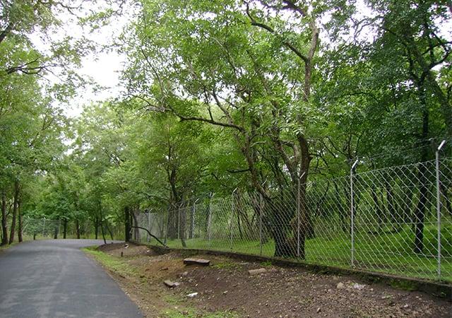 Traverse-sandalwood-forests-at-Marayoor