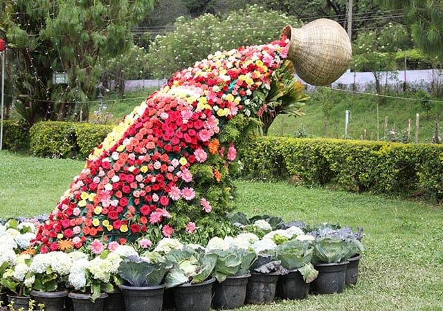 munnar flower show
