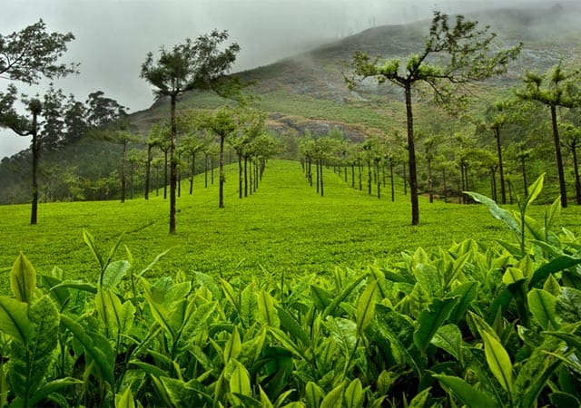 Munnar during the rainy season – Also a Good time