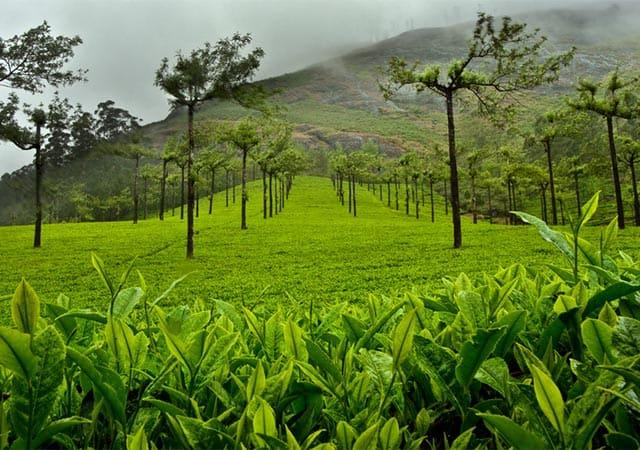 Munnar during the rainy season – Also a Good time