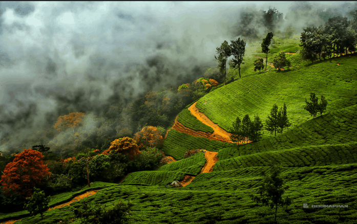 Munnar during the August to May season – The best time
