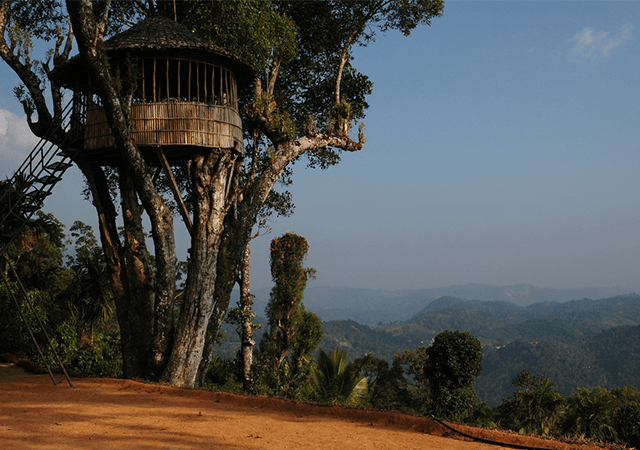 Tree-house-in-Munnar
