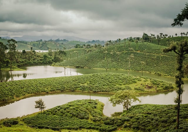 Valparai Tea Estates