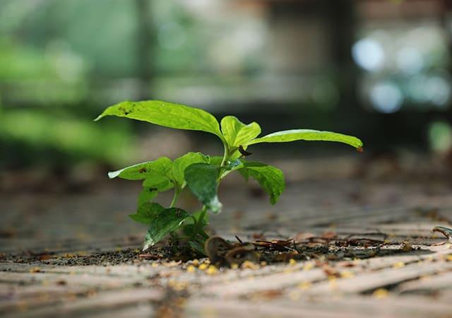 Plant a sapling