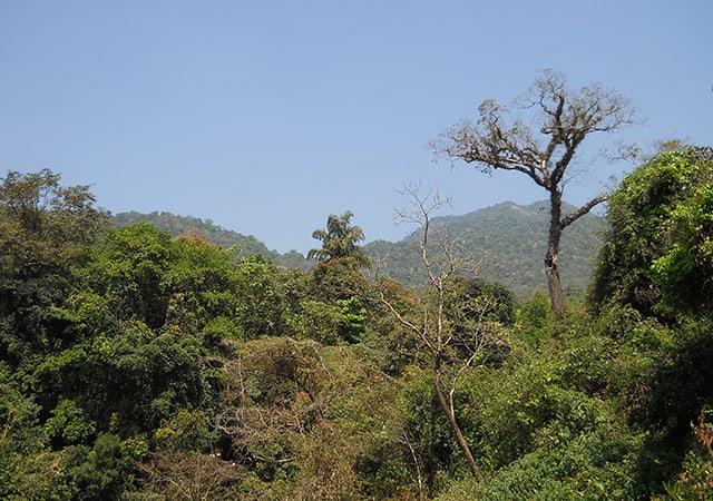 Thusharagiri Waterfall