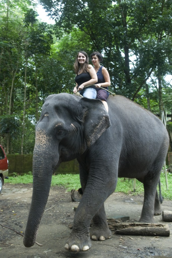 Enjoy an Elephant Ride