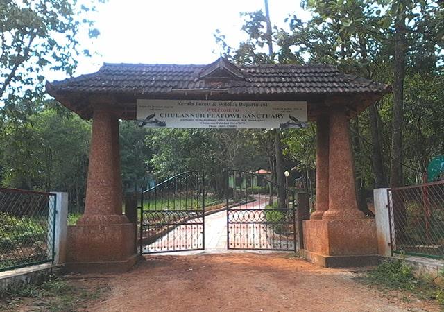 Visit Chulannur Peacock Sanctuary