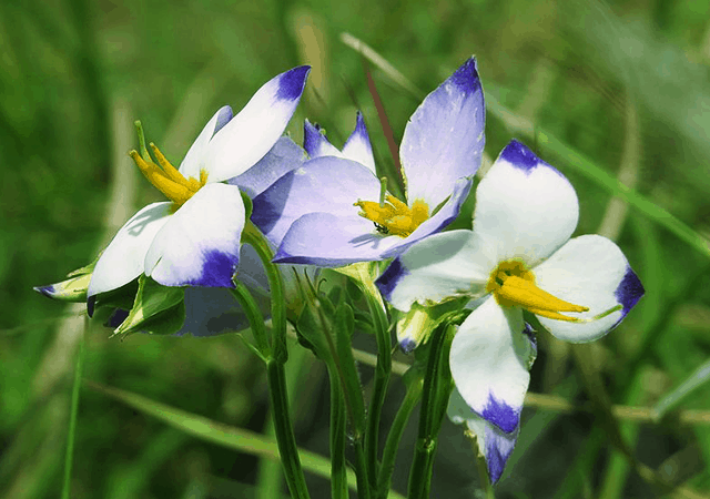 Paithalmala-Flora and Fauna