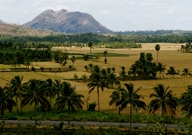 palakkad_paddy_fields.
