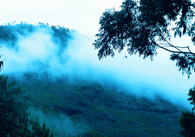 Mist Covered Hill