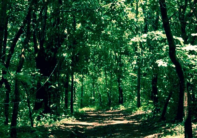 Kareem Forest