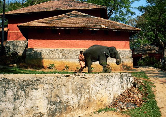 Konni Elephant Training Centre