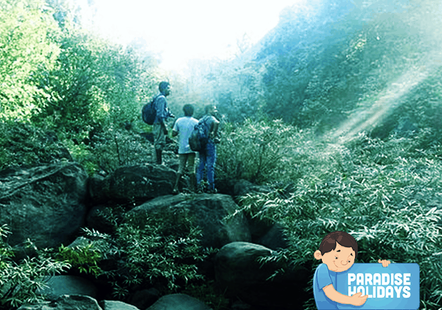 Kakkadampoyil Western Ghats