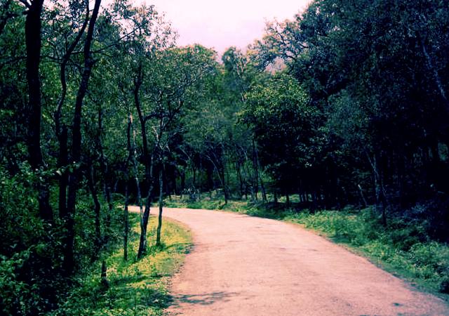 Munnar to Marayoor