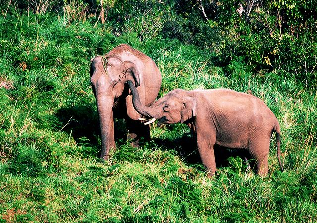Gavi Elephants