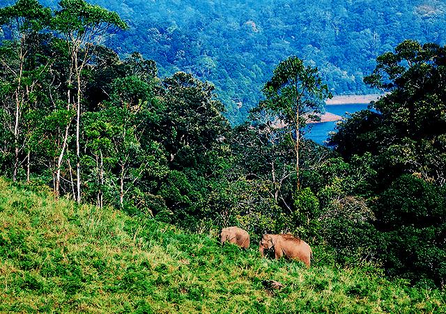 Gavi Elephants on Hill