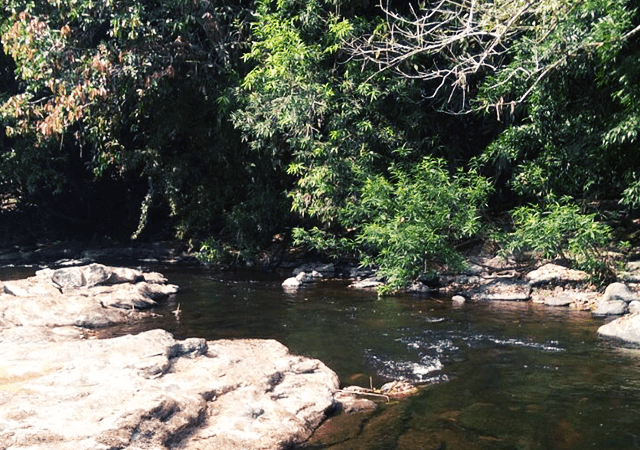 Slow Flowing Stream at Pooyamkutty