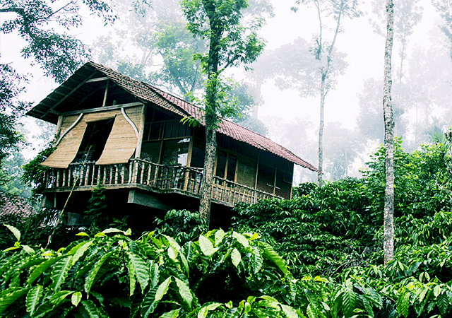 Coffee Country Resort