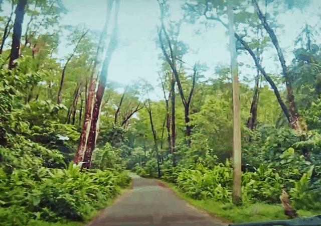 Road to Aali Veena Waterfall