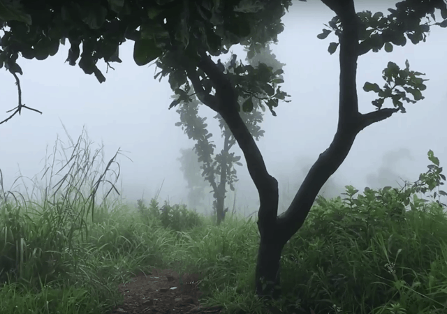 Way to Kattadikadavu Hilltop