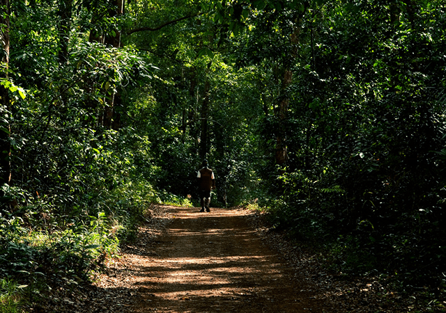 Road to Sankhili Forest