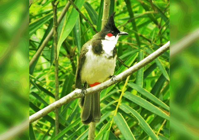 1. Kumarakom Bird Sanctuary