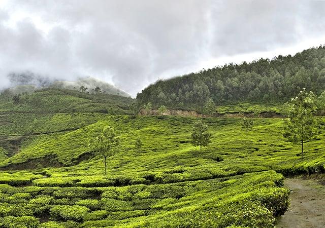 Munnar Panorama