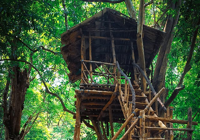 Stay-in-tree-houses